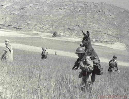(http://3.bp.blogspot.com/-rTr8wAcoPBU/T0xHbxGfsvI/AAAAAAAAP68/10bsUBDJX7A/s1600/man-carrying-donkey.jpg)